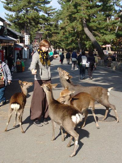 Nara_feeding_deer.jpg