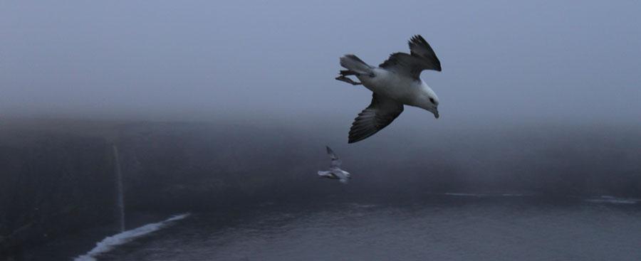 seagulls-ketubjorg