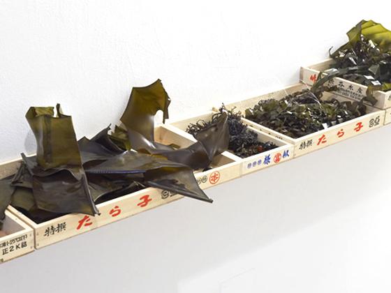 seaweed-exhibit-1.jpg
