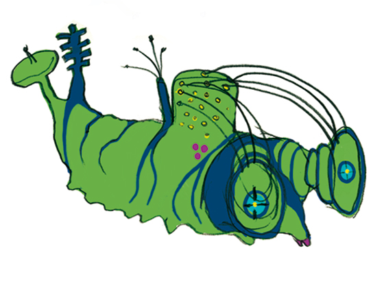 caterpillars-12.jpg