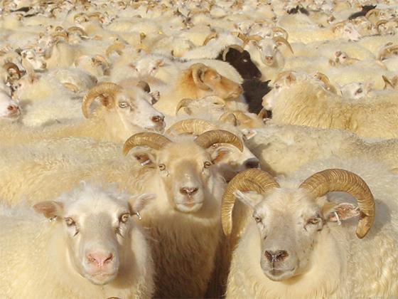 flock-4.jpg