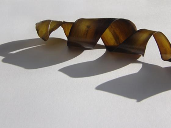 kelp-construct-9.jpg
